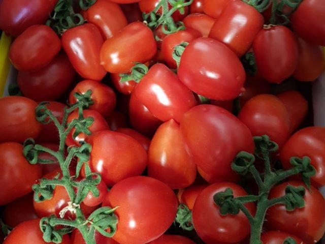 Roma Strauch Tomaten