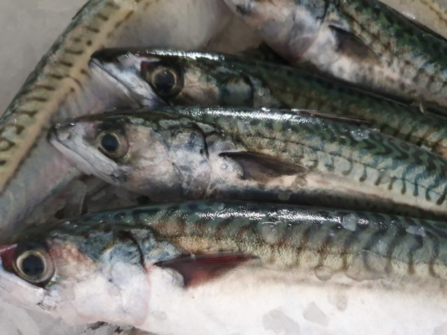 Makrelen in Sushi-Qualität